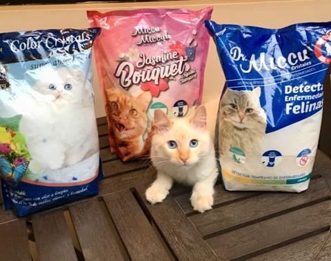 gato miccu miccu servimarket ecuador